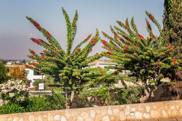 Schöne grüne büsche mit rosa blumen in einem resort in einem südlichen land.