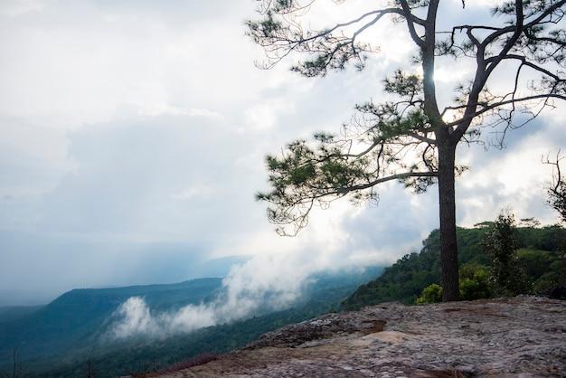 Schöne grüne kiefern auf bergen in thailand