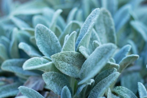 Schöne grüne kräuterblätter, dekorative, saftige anlage