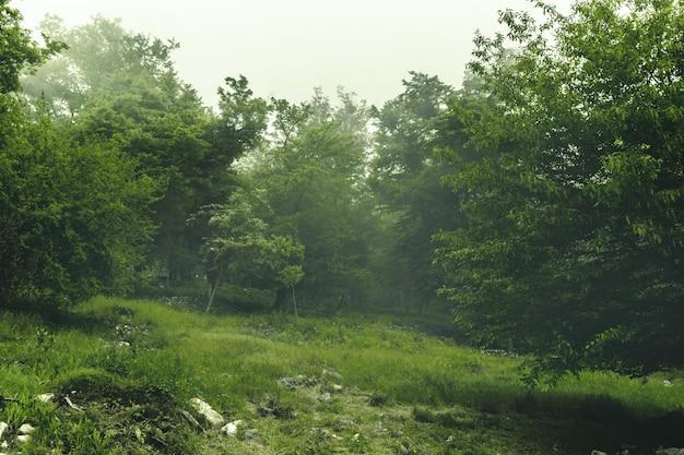 Schöne grüne landschaft des nebelhaften holzes