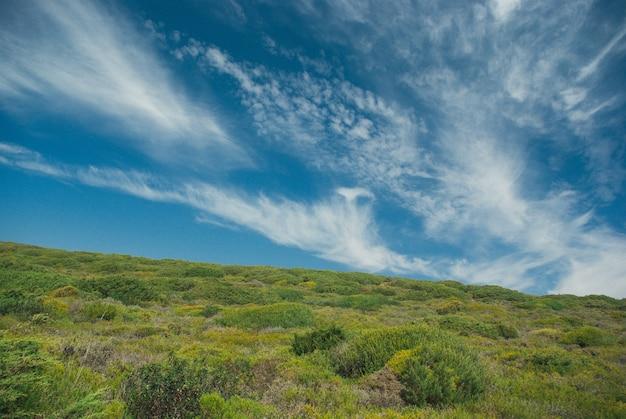 Schöne grüne landschaft mit büschen unter einem bewölkten himmel in portugal