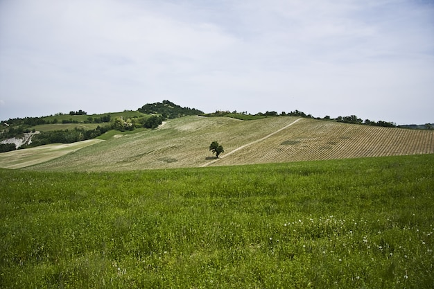 Schöne grüne landschaft mit vielen bäumen unter einem bewölkten himmel