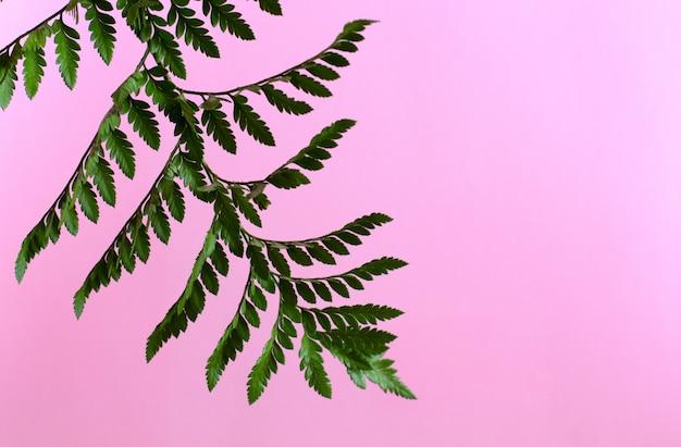 Schöne grüne niederlassung mit weichem rosa hintergrund.