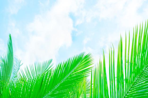 Schöne grüne palmblätter des vegetativen hintergrundes auf einem hintergrund des blauen himmels mit wolkenschablone