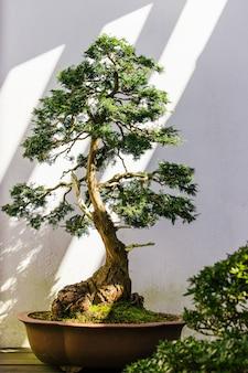 Schöne grüne pflanze auf einem weißen