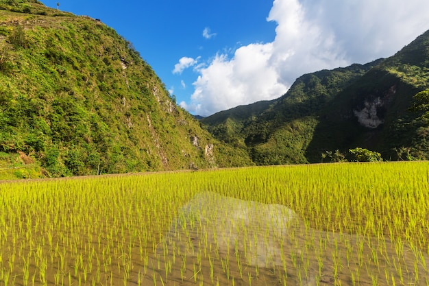 Schöne grüne reisterrassen auf den philippinen. reisanbau auf der insel luzon.