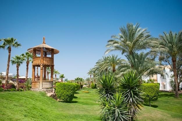 Schöne grünfläche des hotels mit palmen