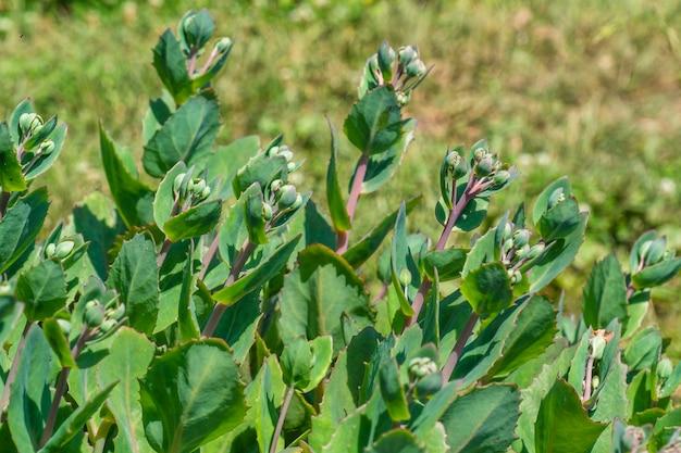 Schöne grünpflanzen, die im garten blühen.