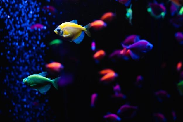 Schöne gruppe von seefischen. buntes leben unter wasser. ternäre nahaufnahme des leuchtend gelben aquarienfisches. selektiver fokus
