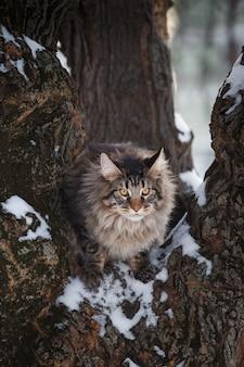 Schöne gtey katzenwanderung im wald im winter