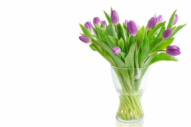 Schöne hellviolette tulpen mit isolierten blättern. frühlingsblumen und pflanzen.