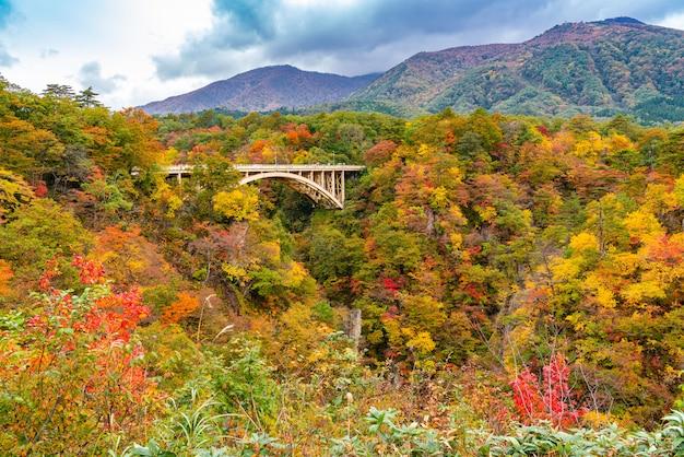 Schöne herbstfarbe des laubes an der naruko-schlucht mit ofukazawa-brücke in der stadt naruko, präfektur miyagi, japan.
