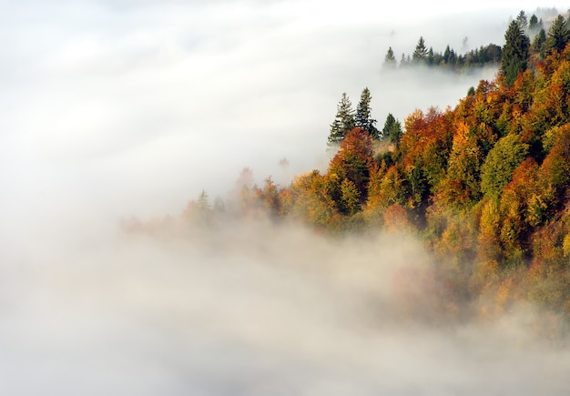 Schöne herbstlandschaft in den bergen karpaty im wald