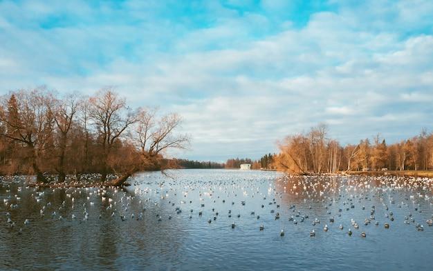 Schöne herbstlandschaft mit einem see und vögeln.