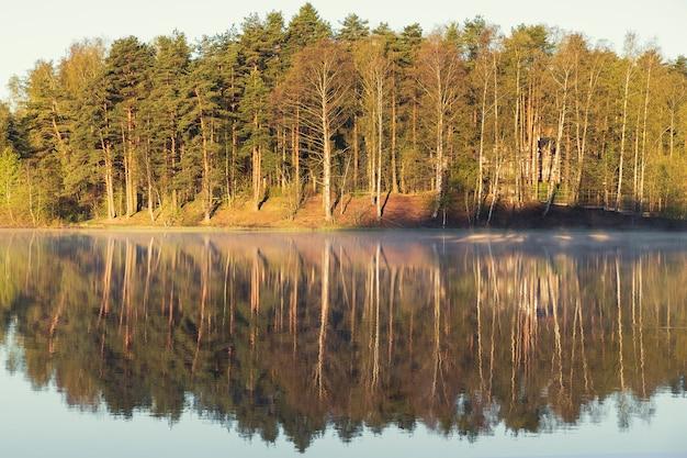 Schöne herbstlandschaft. spiegelreflexion eines kiefernwaldes im seewasser