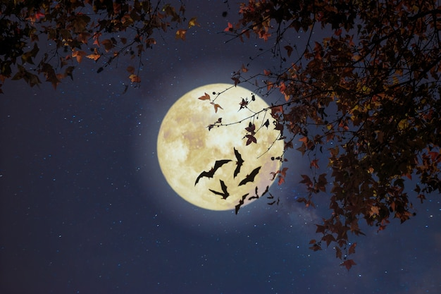 Schöne herbstphantasie, ahornbaum in der herbstsaison und vollmond mit stern. retro-stil mit vintage-farbton. halloween und danksagung im hintergrund der nächtlichen himmel.