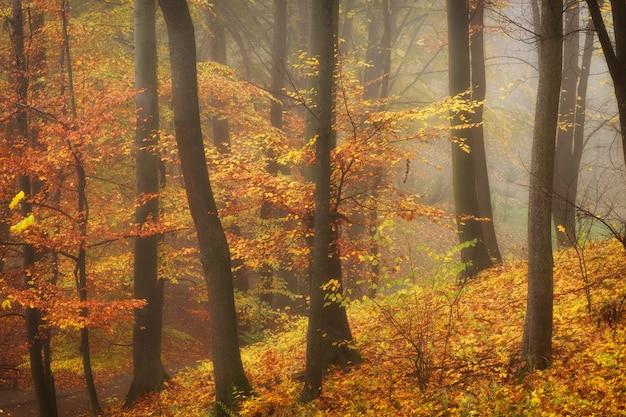 Schöne herbstwald- oder stadtparklandschaft und -nebel