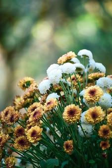 Schöne hochzeitsblumen auf bokeh hintergrund.