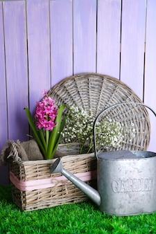 Schöne hyazinthenblume im weidenkorb, auf grünem gras auf farbiger holzoberfläche
