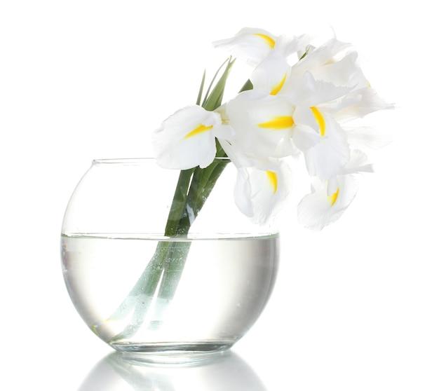 Schöne iris in der vase lokalisiert auf weiß
