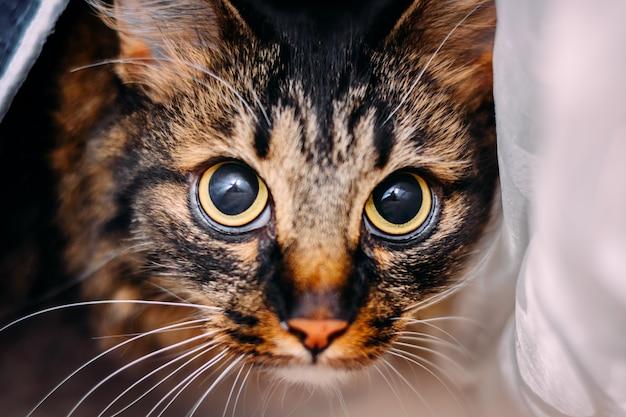 Schöne junge katze mit den großen erschrockenen augen, die kamera betrachten