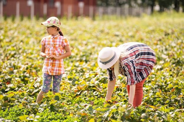 Schöne junge kaukasische mutter mit ihrer tochter pflücke erdbeeren auf dem feld