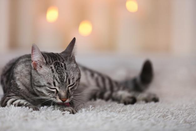Schöne katze auf hellem hintergrund