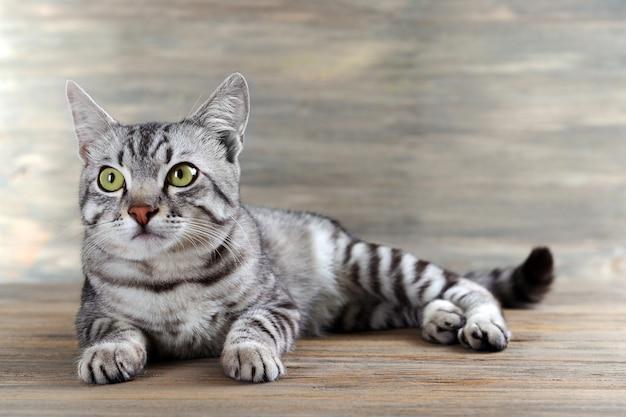Schöne katze auf hölzernem hintergrund
