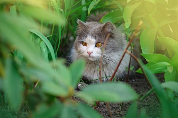 Schöne katze, die auf einem blumengebiet sitzt