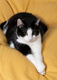Schöne katze, die auf kissen legt