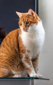 Schöne katze, die auf tisch sitzt