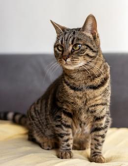 Schöne katze, die im bett sitzt