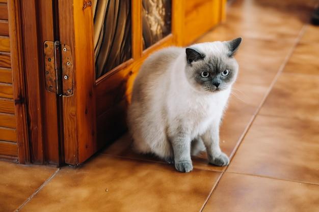 Schöne katze, die zu hause sitzt und sich entspannt