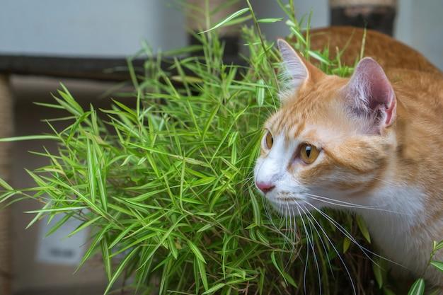 Schöne katze draußen im garten.