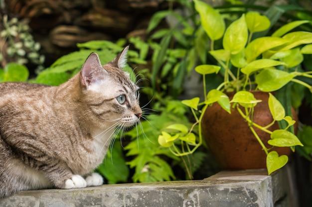 Schöne katze draußen