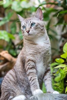 Schöne katze im garten.