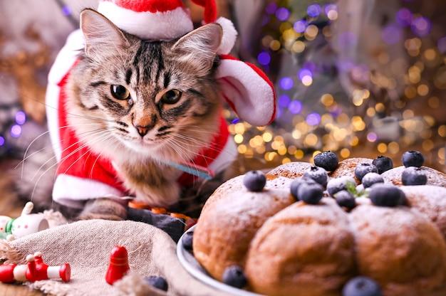 Schöne katze in der weihnachtsmann-kleidung.
