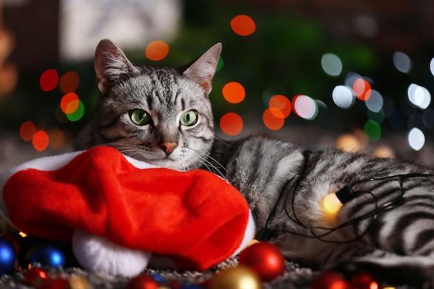 Schöne katze nahe weihnachtsbaum mit dekoration