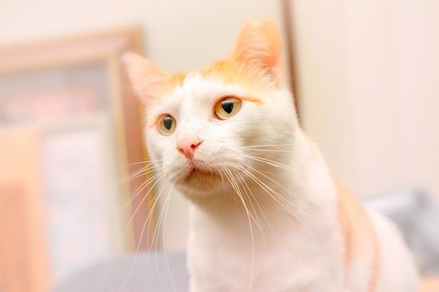 Schöne katze sehr aufmerksam um dich herum