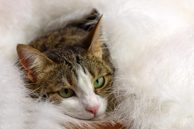 Schöne katze unter flauschiger weißer decke.