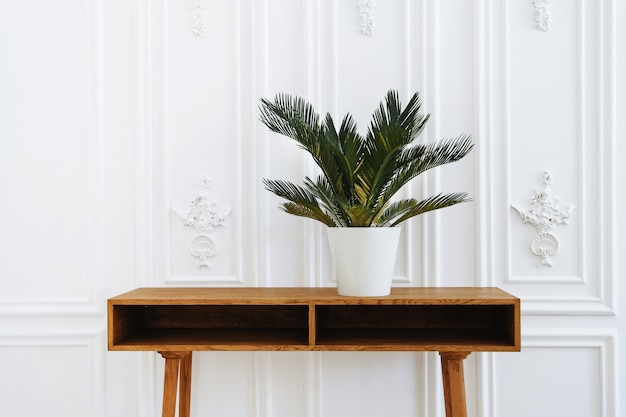 Schöne keramikvase oder topf mit pflanze oder blume.