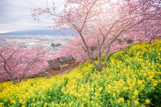 Schöne kirschblüte in matsuda, japan