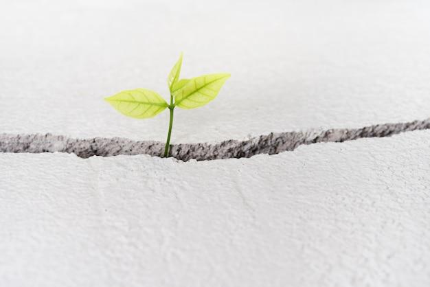 Schöne kleine baumpflanze wachsen auf gebrochener straße, neues lebenwachstumsökologieentwicklungsgeschäfts-finanzkonzept