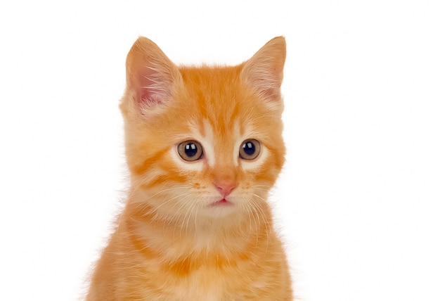 Schöne kleine rote katze, die kamera betrachtet