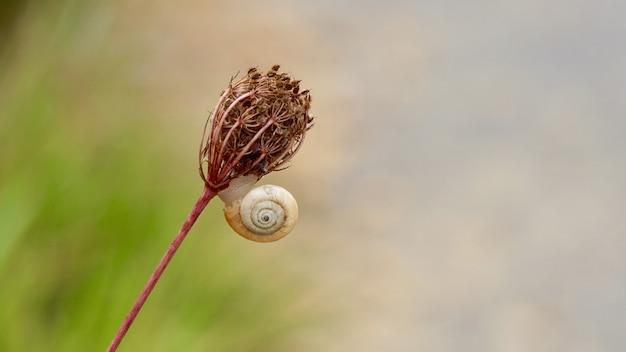 Schöne kleine schnecke auf der blume in der natur in der herbstsaison
