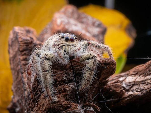 Schöne kleine springende spinne mit buntem hintergrund von der makrophotographie.
