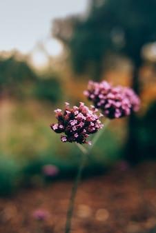 Schöne kleine violette blumen