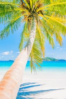 Schöne kokosnuss-palme
