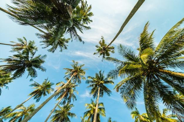 Schöne kokosnusspalme auf blauem himmel