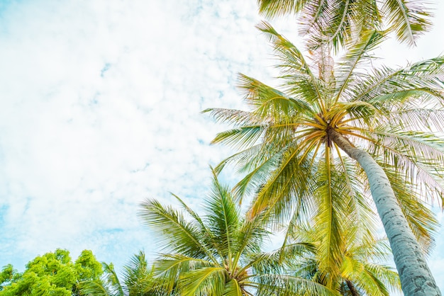 Schöne kokospalme auf blauem himmel